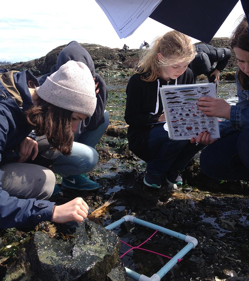 Students from Monteray Middle School learn to identify a variety of intertidal animals on a GO grant funded field trip. Principal Ken Andrews says the school has greatly benefitted from the Wild School program.