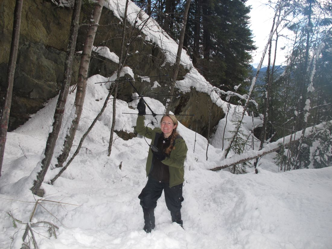 Cori Lausen tracks bats in winter in the West Kootenay region. Telemetry is used to locate hibernacula, as well as provide valuable information about hibernation behaviours and physiology, needed to understand how white-nose syndrome may impact bats in BC.