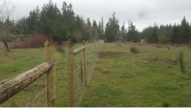 New fence to prevent cattle access