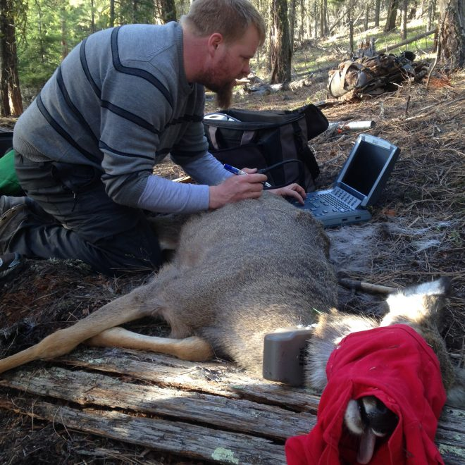 Field research on mule deer in Southern BC (Project 8-408)